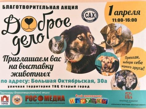 ВЯрославле пройдет акция пораздаче бездомных животных