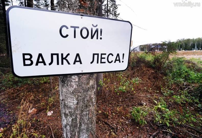 ВРыбинском районе дерево придавило лесоруба