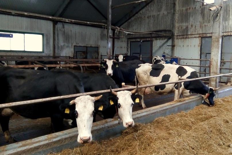 Встроительство молочной фермы вЯрославской области вложат 1,3 млрд руб.